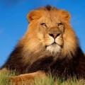 我是天上的狮子